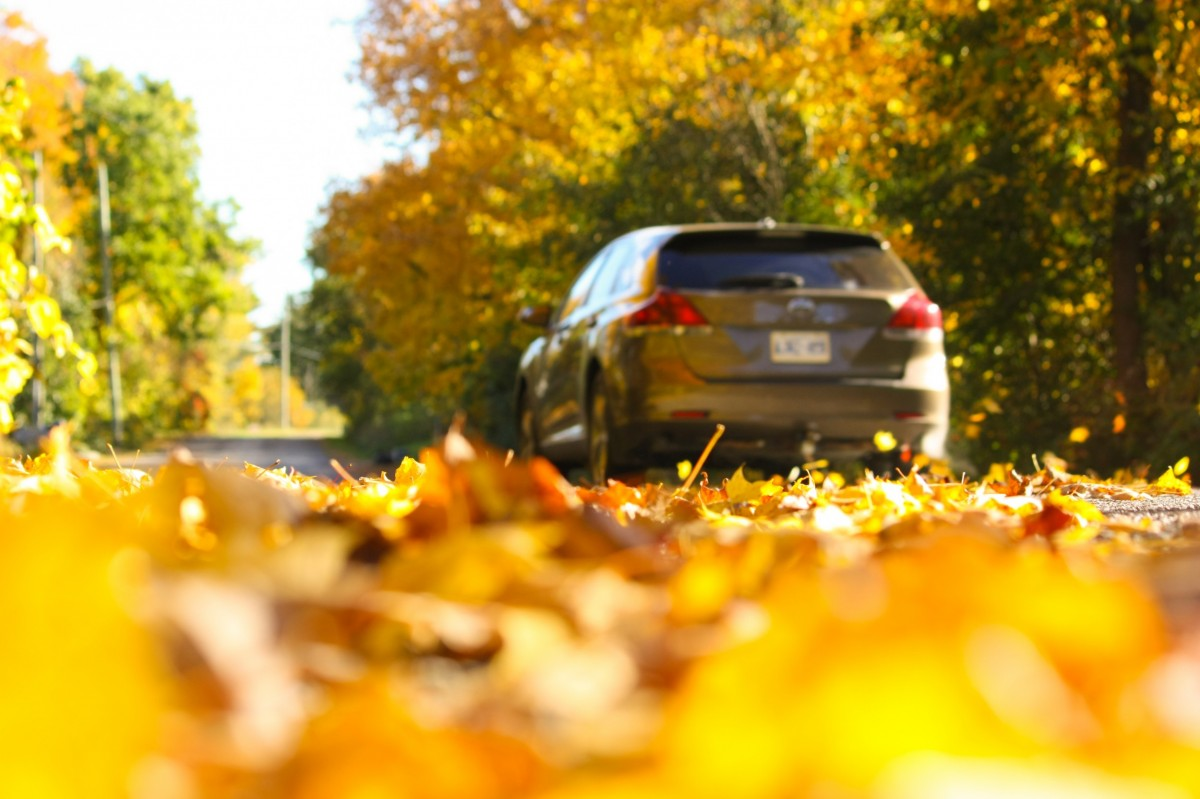 vehicle in fall leaves